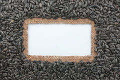 Frame made of burlap and sunflower seeds lies on white background Stock Photo