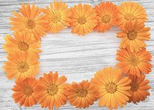A frame made of calendula Royalty Free Stock Image