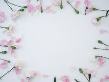 Frame made of carnation on a white background royalty free stock images