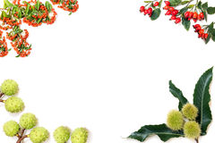 Frame made of chestnuts, rose hips and rowan berries Royalty Free Stock Photos