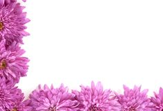 Frame made of chrysanthemum flowers Stock Image