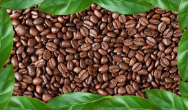 Frame made of coffee beans and green leaves Royalty Free Stock Images