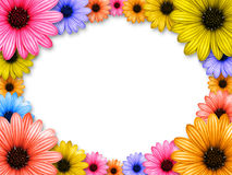 Frame made from colored flowers. With white background Royalty Free Stock Image