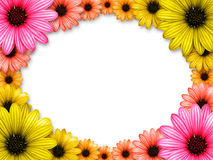 Frame made from colored flowers Stock Images
