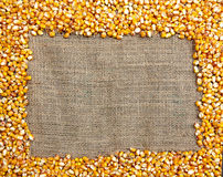 Frame made of  corn seeds Stock Photo