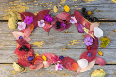 Frame made  of different leaves, flowers and berries Stock Photo