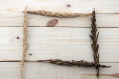 Frame made of different wheats on wood floors Stock Image