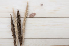 Frame made of different wheats on wood floors. Frame made of different wheats isolated on wood floors Stock Image