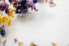 Frame made of dried colored flowers on a white background. copy space. Place for text and design. Greeting card. Flat lay, top view. Flowers composition. Bokeh Stock Photo