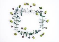 Eucalyptus and acorns frame on white background royalty free stock photography