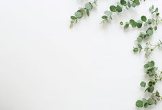 Green eucalyptus branches on white background. Frame made of eucalyptus branches on white background. Flat lay, top view. copy space Stock Photos