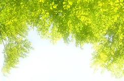 Frame made of green leaves Royalty Free Stock Images