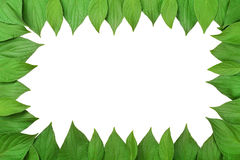 Frame made of green leaves Stock Images