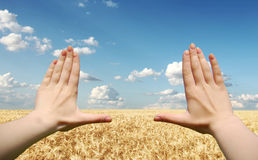 Frame made of hands at wheat field Royalty Free Stock Images