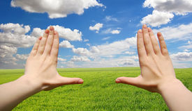 Frame made of hands at wheat green field. Frame made of hands at wheat field Stock Images