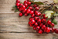 Frame made of hawthorn berries Royalty Free Stock Photo