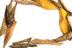 Frame made of leaves isolated Royalty Free Stock Image