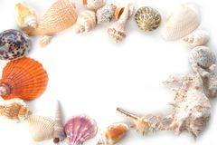 Frame made of many sea cockleshells on white Royalty Free Stock Image