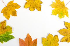 Frame made by maple leaves Stock Photos