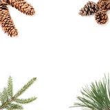 Frame made of needle-leaved branch and pine cones Royalty Free Stock Photos