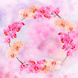 Frame made from orchid blossoms on abstract background Royalty Free Stock Photos