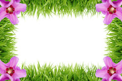 Frame made out of grass with hibiscus flowers Stock Image