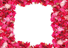 Frame made of petals Royalty Free Stock Photo
