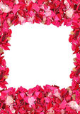 Frame made of petals Stock Images