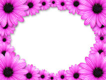 Frame made from pink flowers Royalty Free Stock Images
