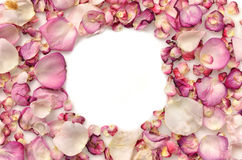 Frame made of pink rose petals. On white royalty free stock image