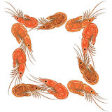 Frame made from prepared shrimps on white background. Vector illustration Stock Photos