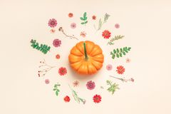 Frame made of pumpkins dried flowers and leaves. Creative Top view flat lay autumn composition. Frame made of pumpkins dried flowers leaves color paper Royalty Free Stock Image