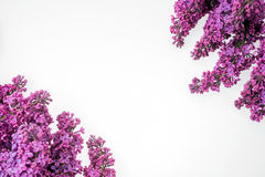 Frame made of purple lilac flower. Syringa vulgaris Royalty Free Stock Photo
