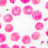 Frame made of purple roses and petals on white background. Flat lay, top view. Floral round composition of pink flowers Stock Images