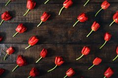 Frame made of red tulips on dark wooden background Royalty Free Stock Images