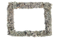 Frame made of reindeer grey moss. Isolated Royalty Free Stock Images