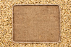 Frame made of rope with barley  grains on sackcloth Royalty Free Stock Photos