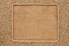 Frame made of rope with rye grains on sackcloth Royalty Free Stock Photo