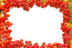 Frame made of rowan berries Royalty Free Stock Images