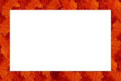 Frame made of rows of red leaves Royalty Free Stock Image