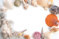 Frame made of sea shells Stock Photography