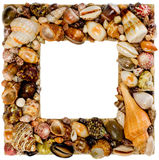 Frame made from seashells Royalty Free Stock Image