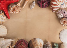 Frame made of shells on old paper Royalty Free Stock Image