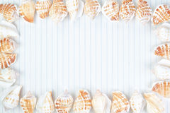 Frame made of shells on paper. Royalty Free Stock Photos