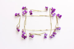 Frame made of small forest flowers purple on a white background with copy space Royalty Free Stock Photo