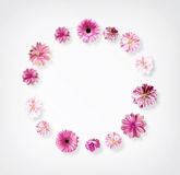 Frame Made from Summer Pink Flowers Royalty Free Stock Image