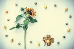 Frame made of sunflower and decorative apples royalty free stock photo