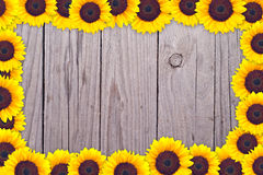 A frame made of sunflower heads Royalty Free Stock Image