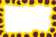 A frame made of sunflower heads Royalty Free Stock Photography