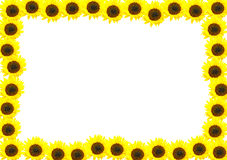 Frame made of sunflowers. Royalty Free Stock Photography